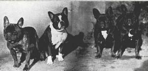 1925_FrenchBulldogs-e1338013076118